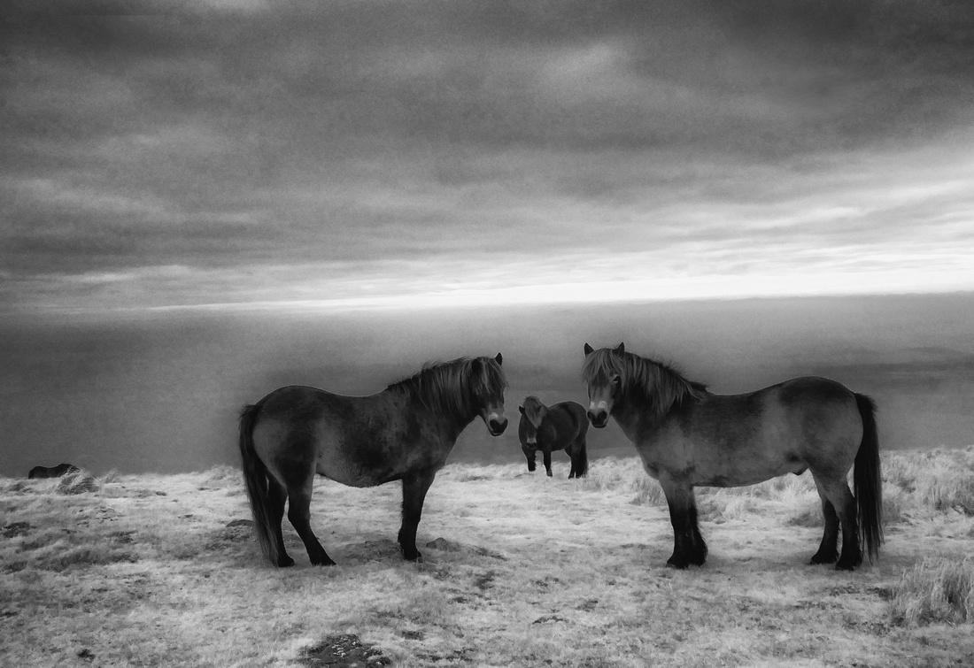 Infrared photography Scotland